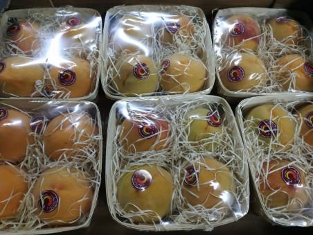 Lote de 6 cestas Melocotón Amarillo (Azukita)